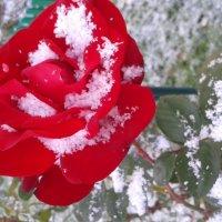 Первый снег :: ovatsya /Ирина/ Никешина