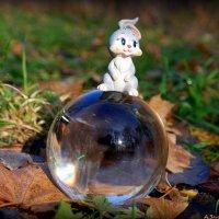 Заяц в осень :: Андрей Заломленков