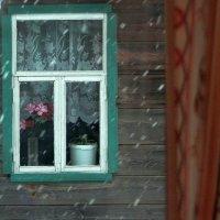 А снег идёт! :: Николай Масляев