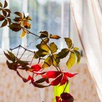 Осенние мазки-2 :: ФотоЛюбка *
