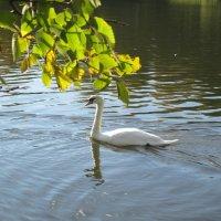 Лебединое озеро :: Агриппина