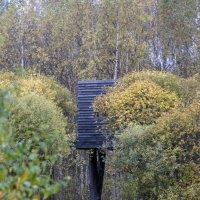 Дом на дереве :: OlgaLi Ли