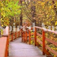 Осень в парке :: Окрылённый Ангел