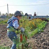 Работа спорится, когда труд в радость! :: Андрей Синицын