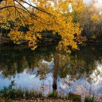 осень в жёлтом :: Tatyana Belova