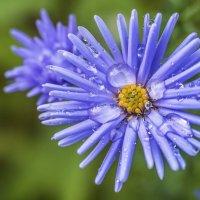 осенний цветок :: Лариса Батурова