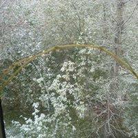 Первый снег... :: Татьяна Юрасова