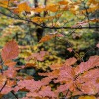 Осень в Закарпатье :: Сергей Форос