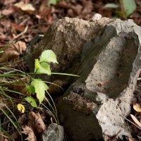 Камень :: Эдуард Монахов