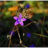 Осенние цветы. :: Любовь Чунарёва