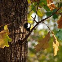 Осень наступила...! :: Наталья