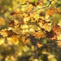 Я люблю тебя, осень, за красу небывалую, за нарядные листья и тепло запоздалое :: Tatiana Markova