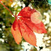 Осенний калейдоскоп :: Alexander