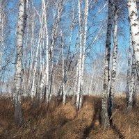 В осеннем лесу :: Domna Kuznechic