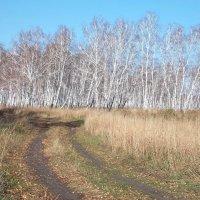 Дорога в осеннем лесу :: Domna Kuznechic