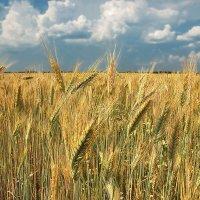 в поле :: sergej-smv