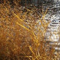 Солнце на воде :: Наталия Григорьева