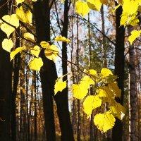 Здравствуй, Осень! :: Лазарева Оксана