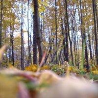 Осень. :: Oleg4618 Шутченко