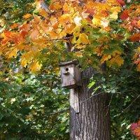 Осень, улетели птицы .... :: Ната Волга