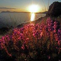 Весенний этюд на закате :: viton