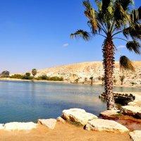 Оазис в пустыне Негев :: Евгений Дубинский
