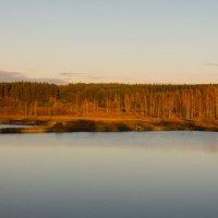 Река Печесть. Нижегородская область :: Роман Царев