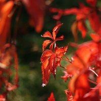 Осень в моём саду -2 (Октябрь 2015) :: Karlina *** (Елена К)