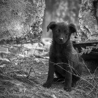 Из жизни бездомных собак... :: олег