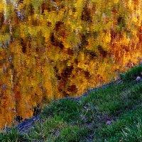 осень в воде :: Александр Прокудин