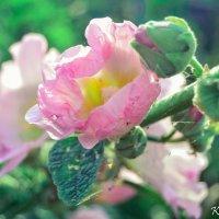 Нежность весны :: Дарья Киселева