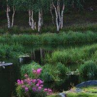 Из серии «Райский уголок». :: kolin marsh