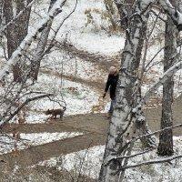 Прогулка по первому снегу :: Domna Kuznechic