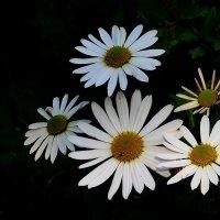 Цветы запоздалые :: Natali