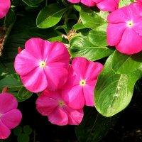 Цветы запоздалые 3 :: Natali