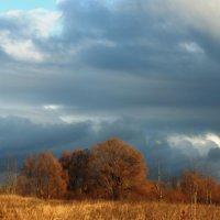 декабрьское потепление :: prokyl