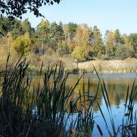 Озеро Кузнечное :: Елена Павлова (Смолова)