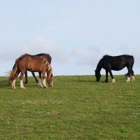 Разноцветные лошадки :: Natalia Harries