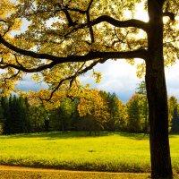 Екатерининский парк осенью :: Михаил Бояркин