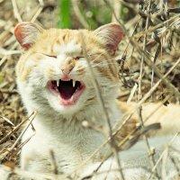 Один Бездомный Кот :: Ксения Старикова