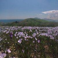 Весенние склоны в цветах утопают :: viton