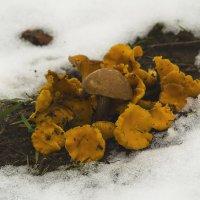 Первый снег и последние грибочки :: Владимир Максимов