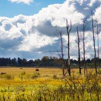 Осень :: Y Laskina