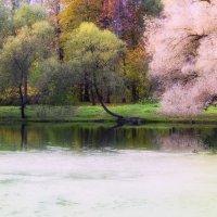 Осени акварель. :: Ирэна Мазакина