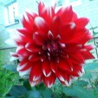 Цветок :: Миша Любчик