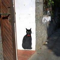 Гурзуфский кот 2 :: Наталья Покацкая