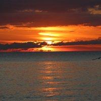 Закат в ненастный день :: valeriy khlopunov