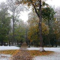 Первый снег :: Олег Бурлака