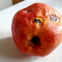 Как не повезло яблоку :: Валерий Талашов