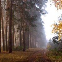 Теплом осенним солнечный туман... :: Лесо-Вед (Баранов)